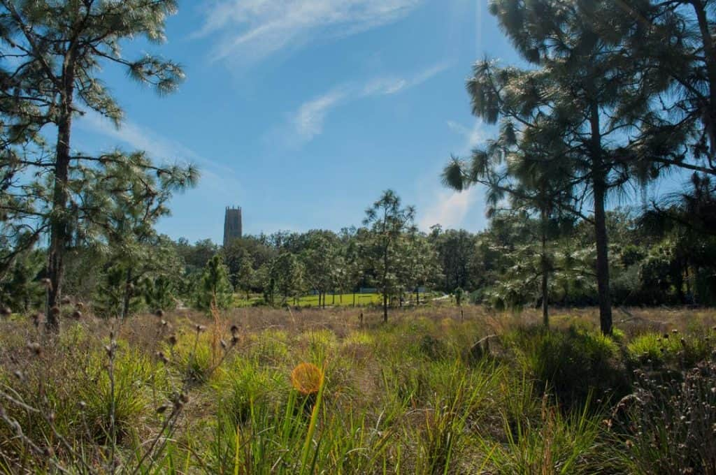 Photo of Bok Tower from a nearby field