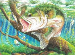 Colored pencil drawing of a large mouth bass