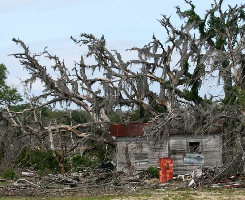 Blown down trees with Spanish Moss, old grey house